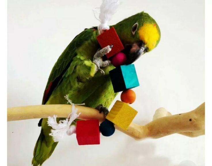 brinquedo mordedor p/papagaio arara jandaia  encanto das ave