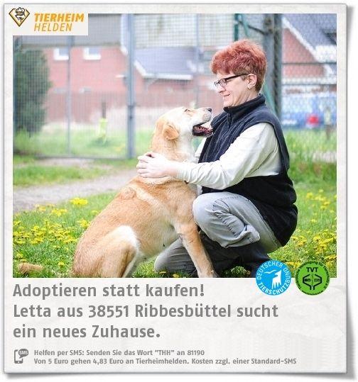 Lette wurde aus einem Tierheim in Lettland mitgenommen und im Tierheim Ribbesbüttel abgegeben.  https://www.tierheimhelden.de/hund/tierheim-ribbesbuettel/rasse/letta/10610-0/  Lette ist eine sehr selbstständige Hündin und einige male aus dem alten Zuhause ausgebüchst. Sie ist menschenfreundlich und für Familien mit Kindern geeignet. Mit Rüden kommt sie gut zurecht, auf Hündinnen kann sie verzichten.