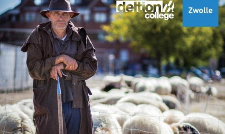 Filmpremière De Zwolse schaapskudde | Gemeente Zwolle