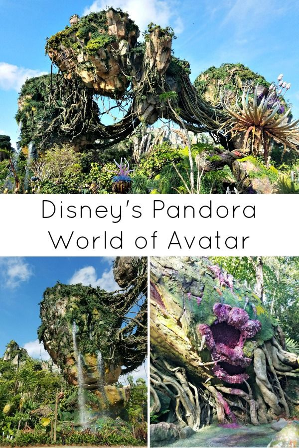 Excited to visit Pandora - The World of Avatar at Disney's Animal Kingdom in Walt Disney World but can't wait to learn about it first? Here's what you can expect to see, do, and eat on your visit.