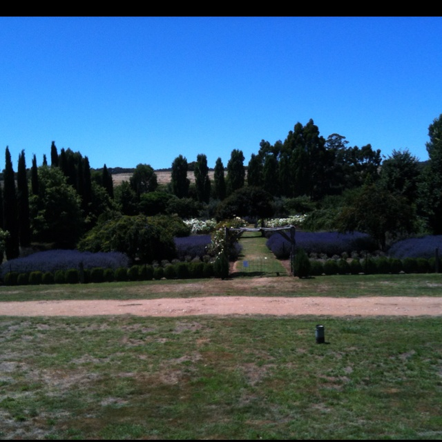 Lavendula lavender farm close to sense of place Eco retreat. A great place for lunch, wine and lavender.