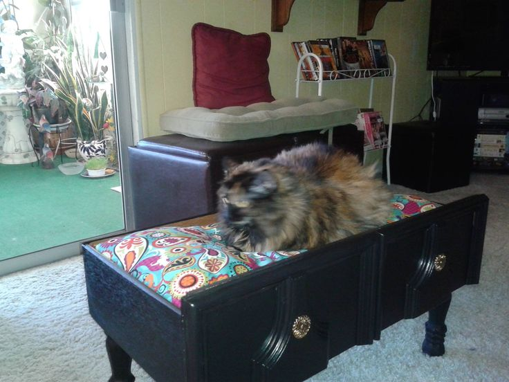 Cat bed made out of broken chest of drawer. Painted. Added Legs. Old bed pillow (recycle) and WAlla! Happy Cat.