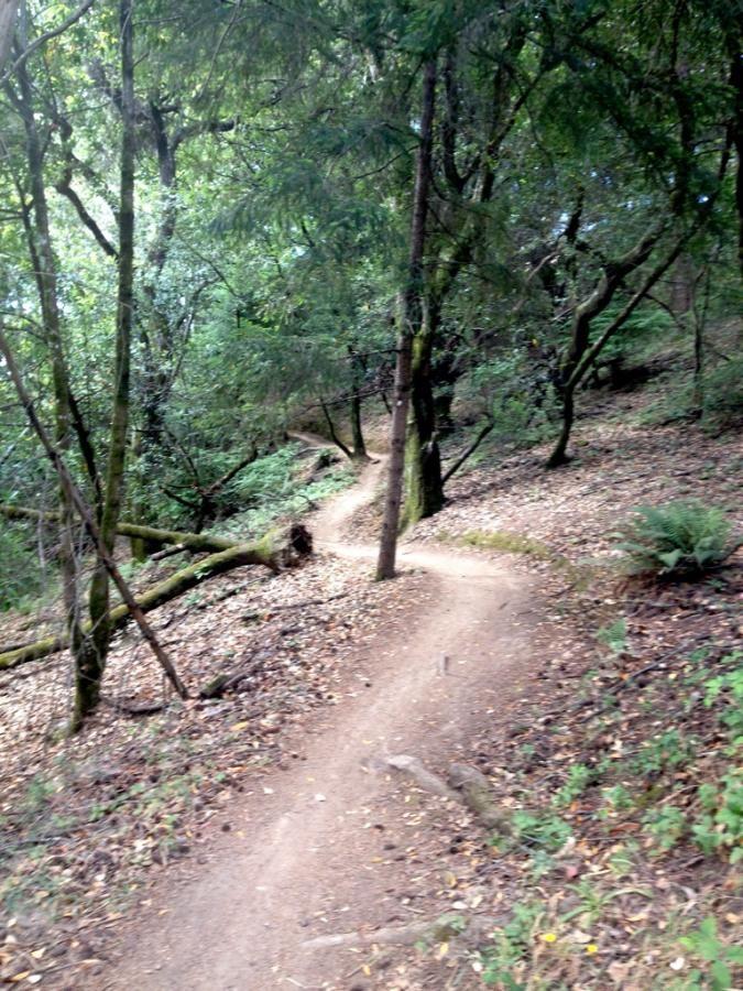 Visiting the Birthplace of Mountain Biking: Marin County, California.
