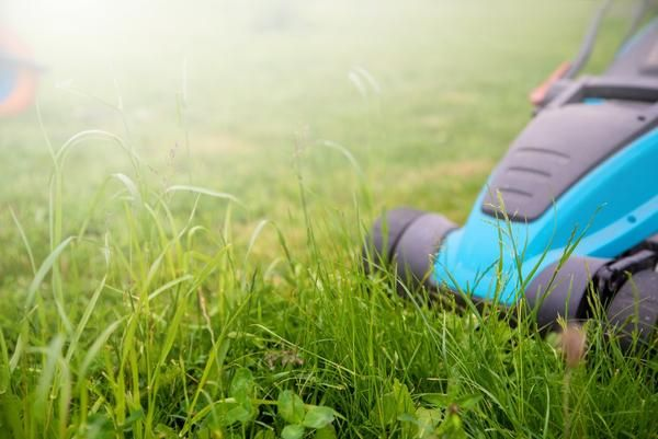Lawn Care Blog Simple Lawn Solutions In 2020 Lawn Care Lawn Blog