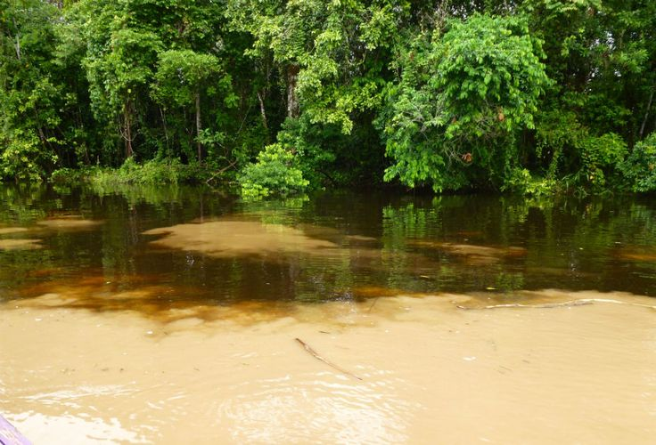 water discolouration from tannins in #BalckwaterCreek #AmazonAdventure #AtoZChallenge O: Observations