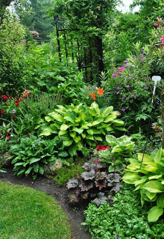 A mix of perennials including several hosta, a Brunnera, a Heuchera and a Pulmonaria.