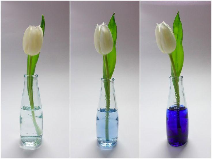 http://happyface313.com/2016/03/17/wir-sehen-blau/ - HappyFace313-wir-machen-blau-tulpen-Collage