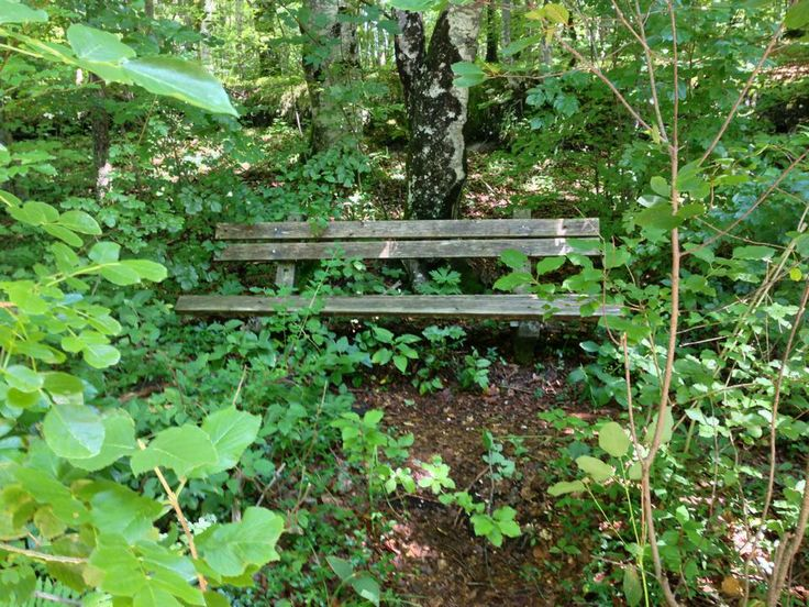 I loved this hidden bench at the lake
