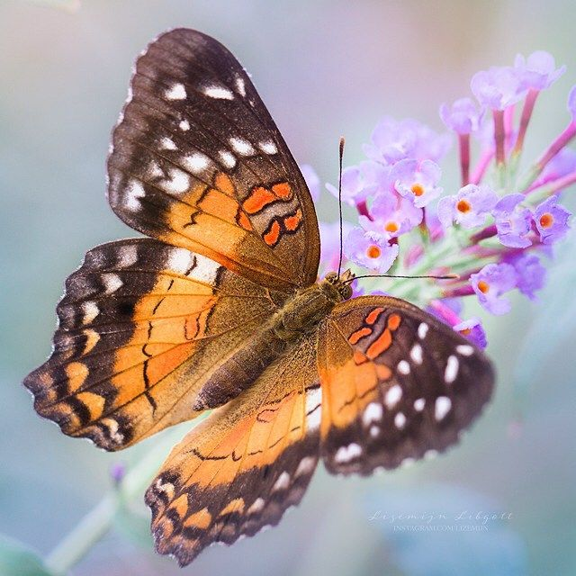 Beautiful orange butterfly