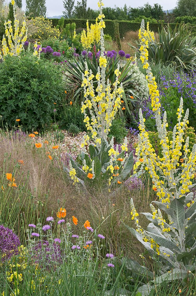 Unusual  Best Images About Plant Combos I Like On Pinterest  Gardens  With Extraordinary Rhs Garden Hyde Hall Dry Garden With Attractive Arduaine Gardens Also Walkie Talkie Roof Garden In Addition Sherbrooke Gardens And Radway Bridge Garden Centre As Well As Garden Gourmet Composter Additionally Healing Garden Green Tea Body Spray From Pinterestcom With   Extraordinary  Best Images About Plant Combos I Like On Pinterest  Gardens  With Attractive Rhs Garden Hyde Hall Dry Garden And Unusual Arduaine Gardens Also Walkie Talkie Roof Garden In Addition Sherbrooke Gardens From Pinterestcom