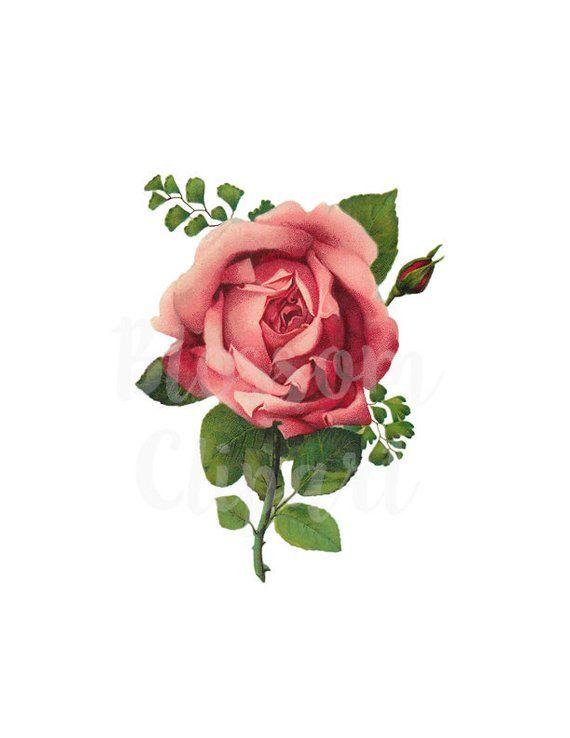 Antique Rose Clip Art Pink Rose Png Rose Image Rose Etsy In 2021 Rose Art Rose Illustration Antique Illustration