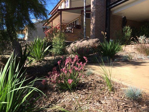 native garden sydney Australian native garden design landscape design ideas natives modern bush rock sandstone