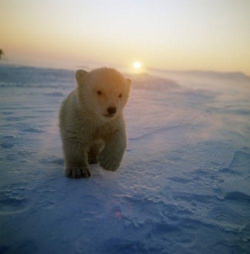Polar bear!!!!  #AdeaEveryday