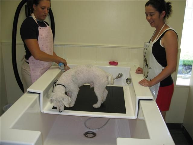 18 best dog park dreams grooming self serve baths images on self serve dog wash newbreedtubs solutioingenieria Gallery