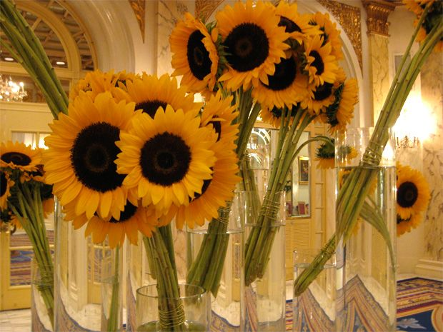 Bind A Few Stems Of Sunflowers With Wire And Drop Them In A Vase Repeat With Several Vases And