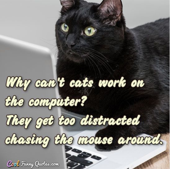 Funny Cat Sayings Quotes: 2982 Best Images About Funny Animals II On Pinterest