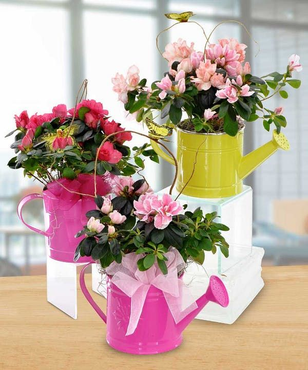 Send A Beautiful Blooming Azalea Plant Perfectly Placed Inside A Colorful Watering Can Each Watering Can Is Topped O Flower Centerpieces Florist Table Flowers