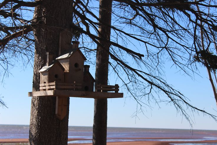 bird houses on the shore line trail