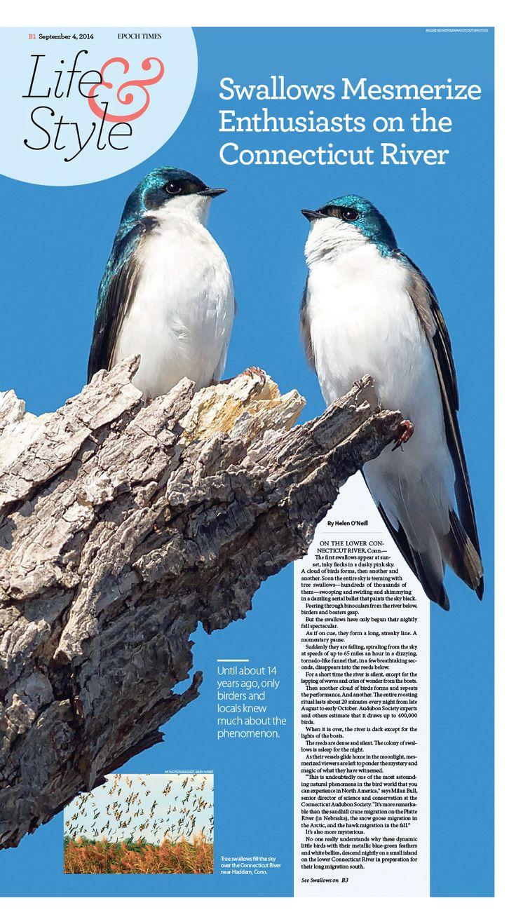 best lifestyle images on pinterest editorial design journals