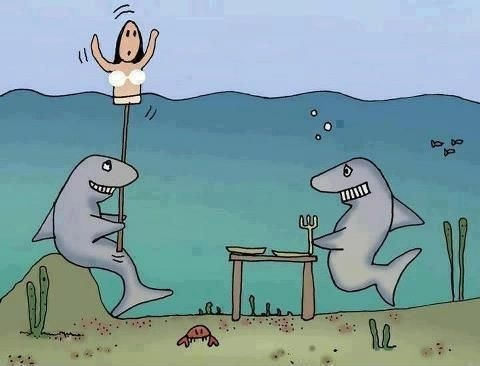 Smart Sharks Funny Picture