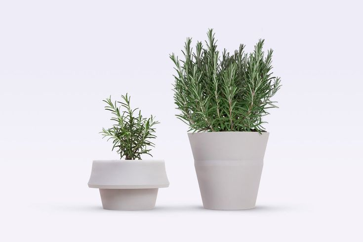 A Pot that Grows with Your Plant