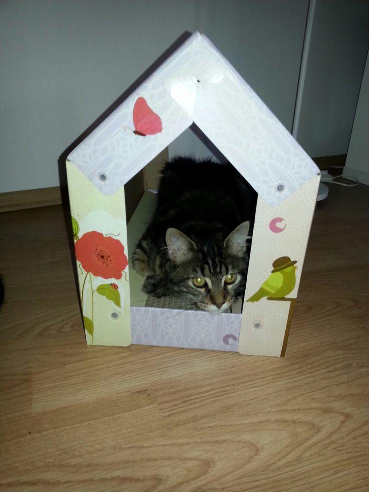 Cat in da house
