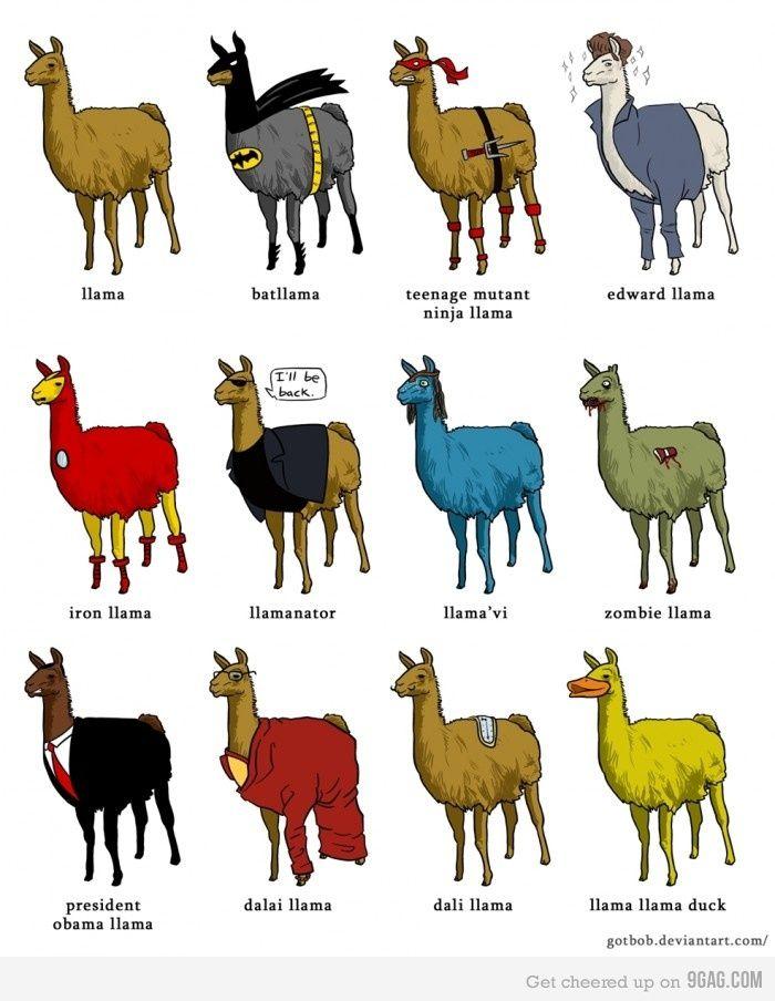 Llama Humor!! Love!