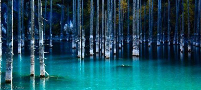 Voulez-vous voir de vrais fantômes ? Une forêt sous-marine cristallisée par lanature