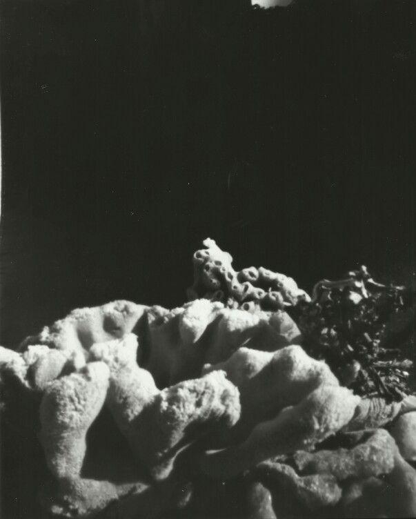 """Koraal 1"", 2015-pinhole photograph (chloe obermeyer)"