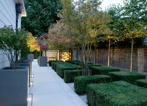 A lovely example of the elegance of clipped box hedging, with the use of pleached trees to provide screening and privacy plus the multi-stemmed trees adding further structure and interest to the space.