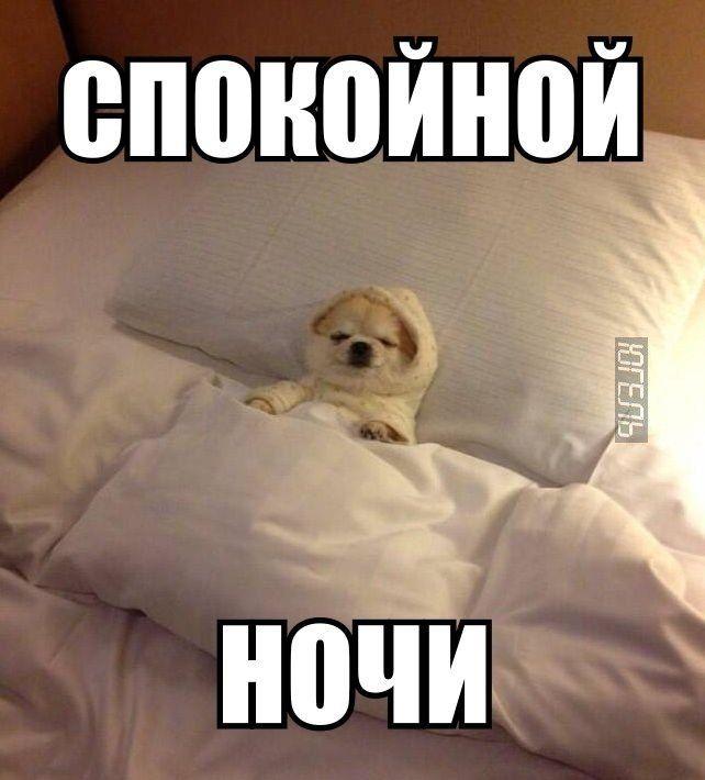 Прикол картинка спокойной ночи, месяцем