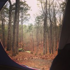 Wooded #tent #camping lots at Red Top Mountain State Park