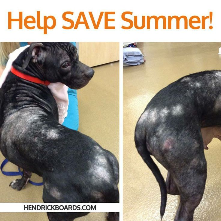 Summer has demodex, which is a common infestation of a dog