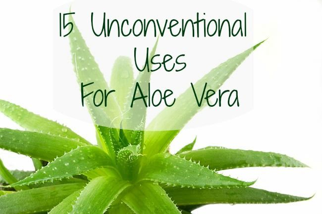 15 unconventional uses for aloe vera -- If you have an aloe vera plant (I think everyone should just in case they burn themselves), this will show you several new ways to use it!