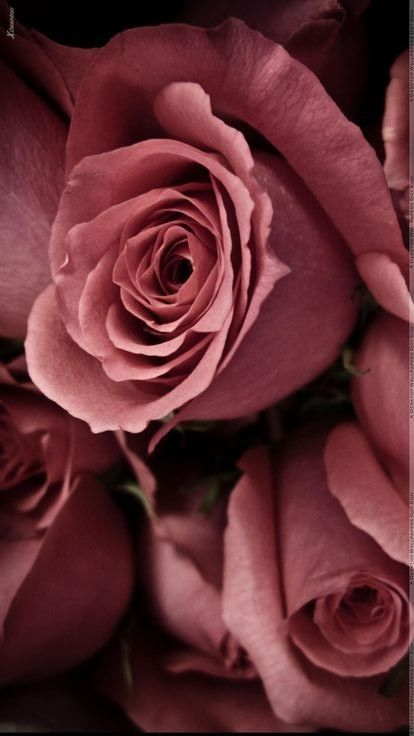❤❤(●◡●)❤❤Antique Rose Color