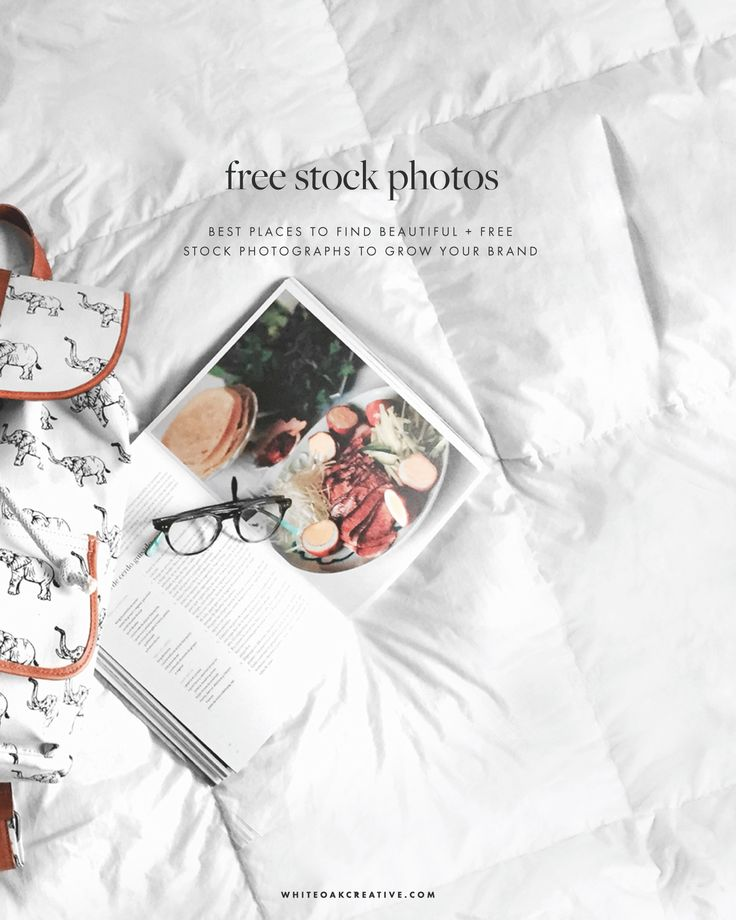 Top five websites that provide free stock photographs for blogging, including comprehensive advantages of each website.