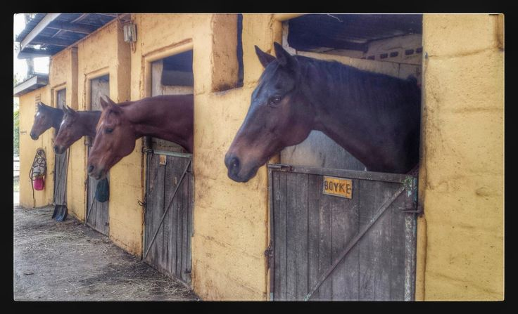 Happy horses in their stables