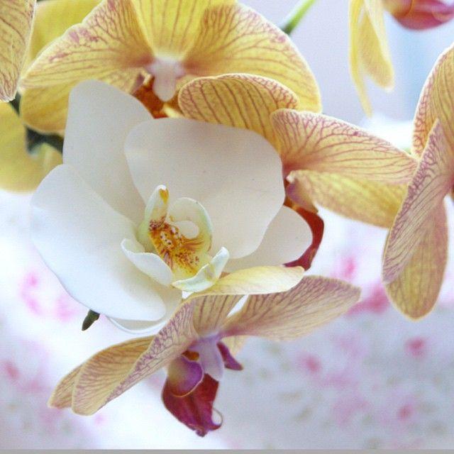 Чудесного понедельника, и сил, на всё Ваши планы! И обязательно берегите себя! У меня цветочная весна в самом разгаре: розы, Ранункулюсы, и 80 орхидей, для прекрасных свадебных торжеств в разных уголках мира!  #цветы #лепка #орхидея #орхидеялепка #лепкаизпластика #свадьбы #свадьбазаграницей #свадьбасуоми #свадьбасанторини #свадебныеатрибуты #свадебныеаксессуары #свадьбавгреции #люблюсвоюработу #андреанна #andreanna #wedding