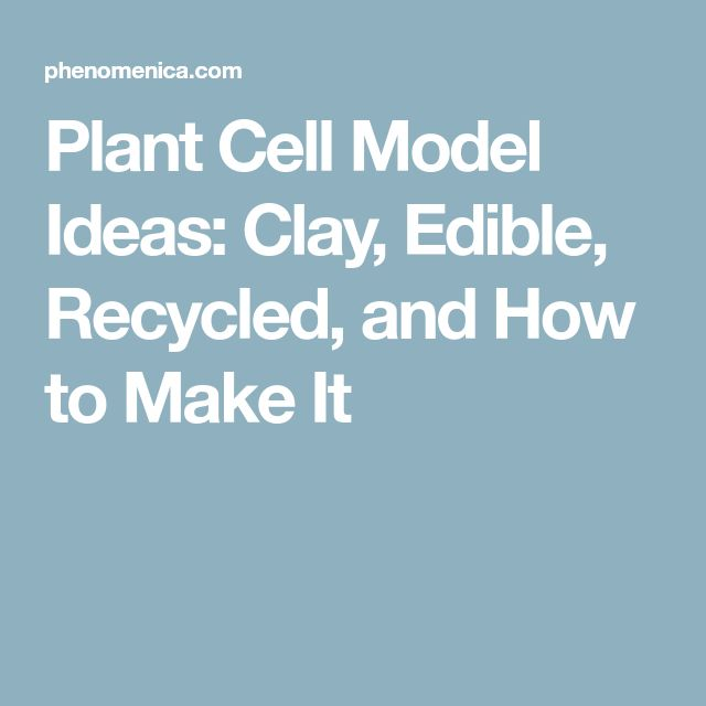 how to build a plant cell with clay