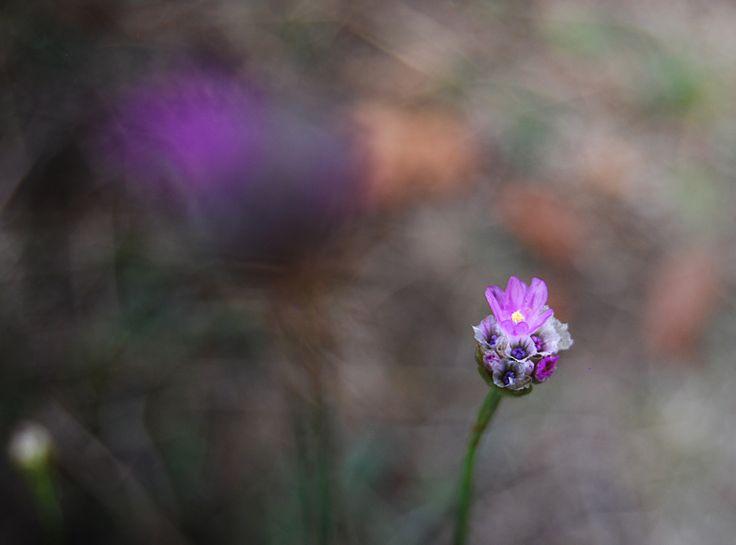 #flower #violet #lila #summer #makro #makrophotography #macro