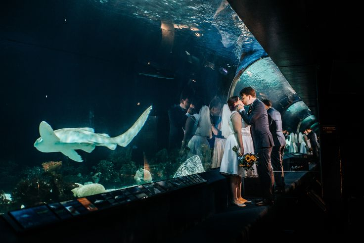 vancouver-aquarium-weddings Wedding photos in front of sharks!