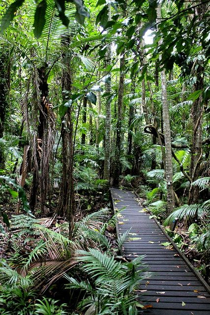Free or Cheap Things to do in Cairns