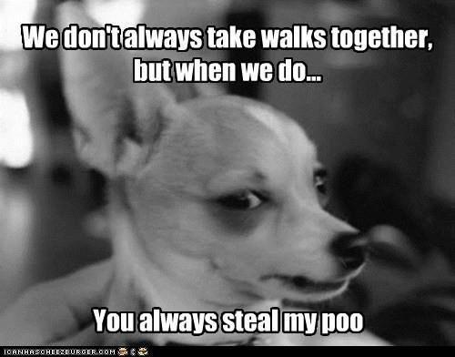 Best Shaggy Dog Jokes