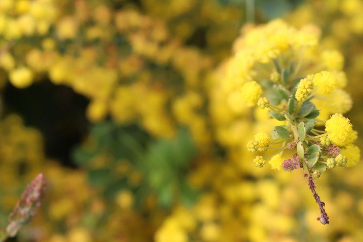 Moana flower