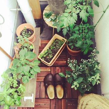 みずみずしい野菜が並ぶベランダに、雲の間から差し込む陽の光。日に日に大きくなっていく野菜たちを眺めながら、水やりをするひと時に幸せを感じる。そんな風に、家庭でできる気軽な菜園を楽しむ人が増えています。