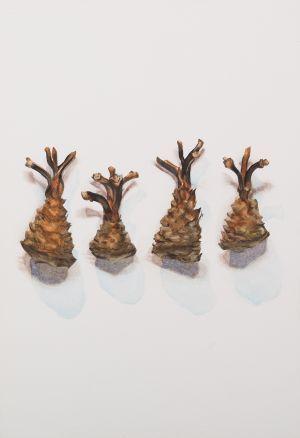 Saara Vainio: Kalutut kävyt / Gnawed Pine Cones. Watercolour, 17 x 25 cm. 2010