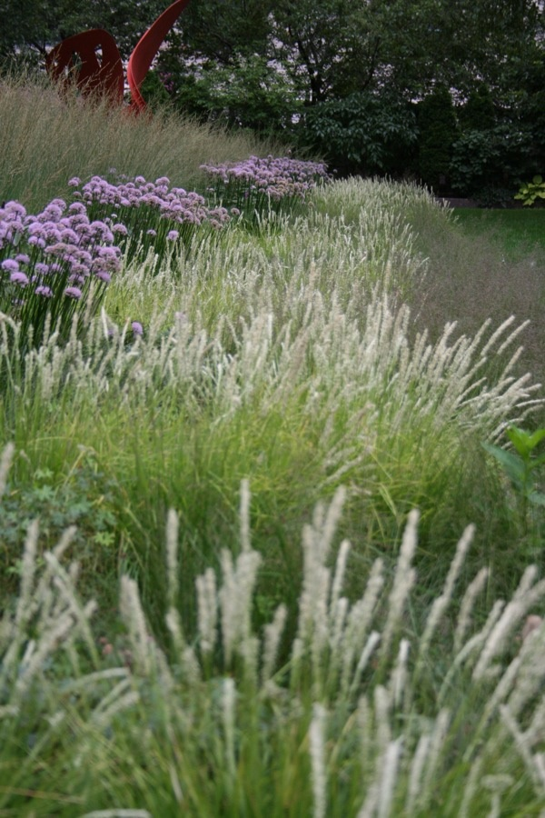159 best images about border beplanting on pinterest for Border grasses for landscaping
