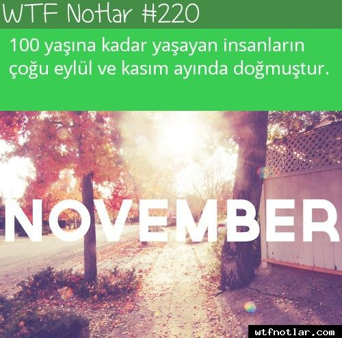 wtf notlar