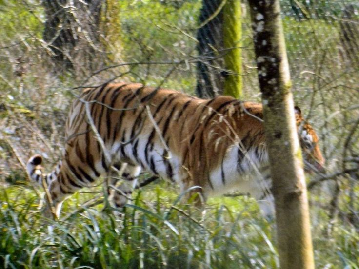 April 2015. Thank you for sharing your wonderful safari snaps with us, John Hetherington!