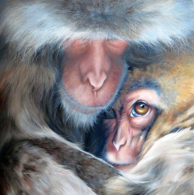 Michelle Caitens - Australian wildlife artist.  'Comfort' Snow monkeys - Japanese macque monkeys who soak themselves in outdoor hot springs in the forest at Jigokudani, near Nagano, Japan. Oil on canvas.  #snowmonkeys #wildlifepainting